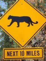 Cats Next 10 Miles