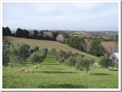 Vineyards & Olive Grove, Waiheke Island