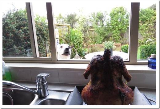 Chicken Bella Window