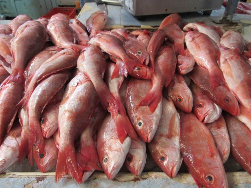 Red snapper at the fish market