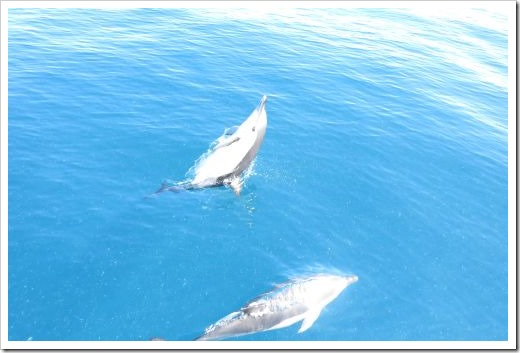 Fishing dolphins