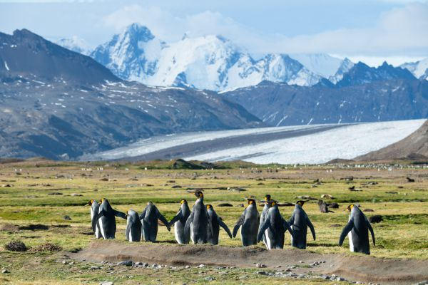 Penguins and glacier