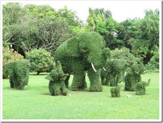 Garden Topairy
