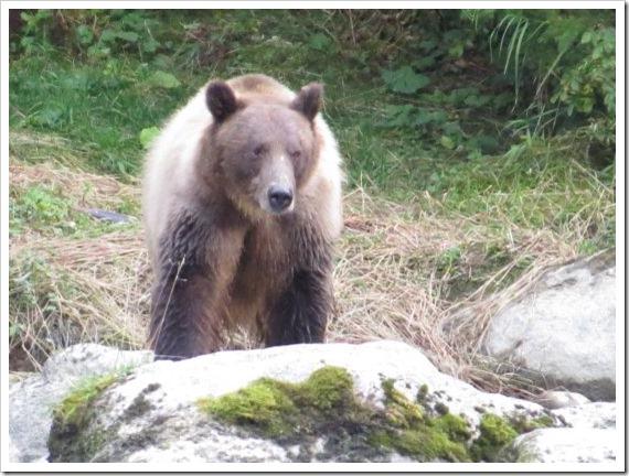 Haine Bear