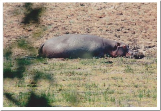 Hippo Bliss