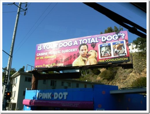 Hollywood Plastic Surgery for Dogs