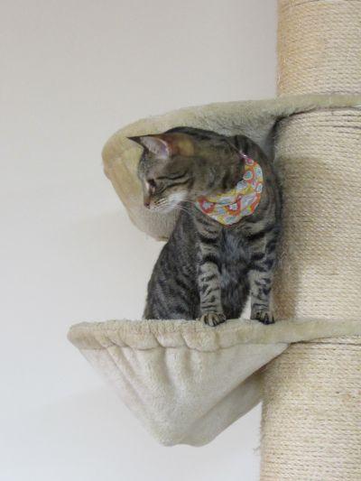 A Barista Cat