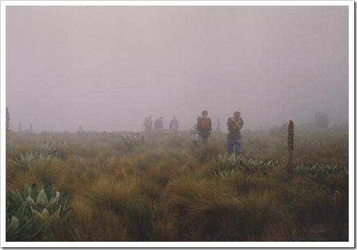 Vertical Bog, Mt. Kenya