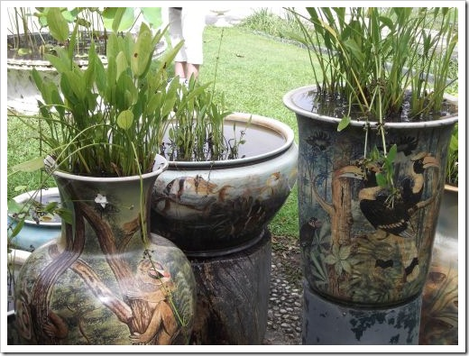 Lotus pots