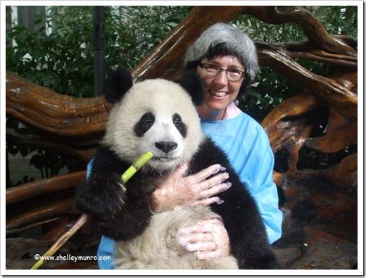 Panda Shelley