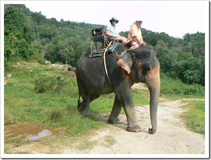 Elephant Ride, Phuket