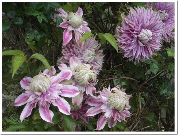 Sark_Pretty Flowers
