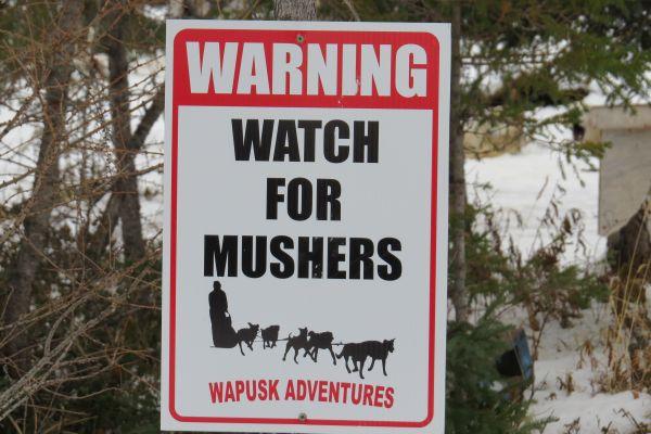 Watch for Mushers