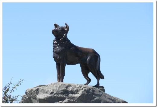Tekapo Dog