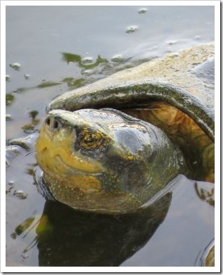 Turtle_Palace