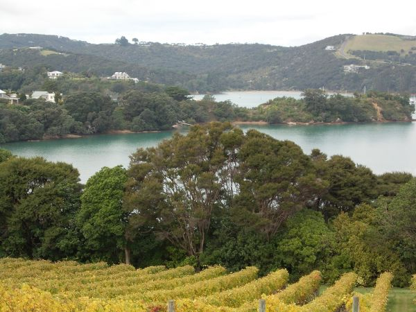 Vineyard view - Waiheke Island