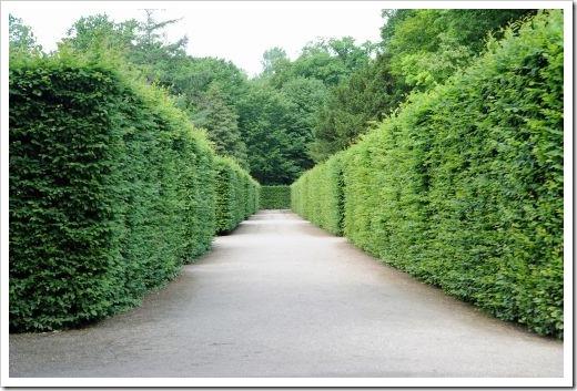 bigstock-Path-Between-Hedges-40060699