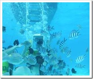 Shelley, surrounded by fish, Bora Bora