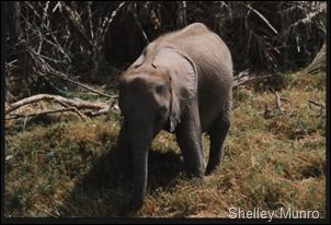 sw baby elephant, Kenya
